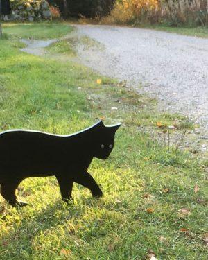 katt i silhuett
